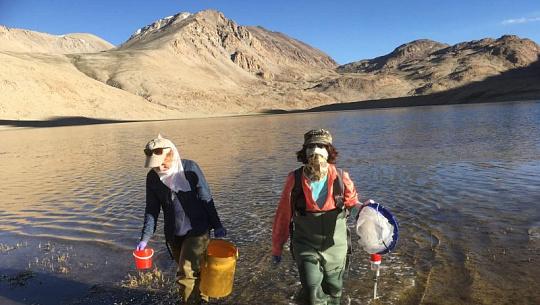 مائکروبکس بیلنس کو موسمیاتی بحران میں پکڑو