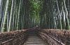 Bamburakentaminen voi jäähdyttää ilmastoa