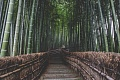 Building With Bamboo Can Cool The Climate