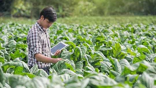 3 Möglichkeiten, wie Farmen der Zukunft den Planeten ernähren und ihn auch heilen können