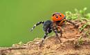 Spindlar hotas av klimatförändringar - och till och med de största araknofoberna bör vara oroliga