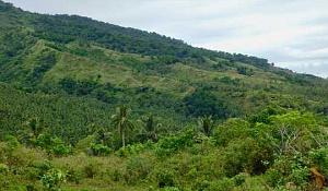Trooppisten sademetsien palauttamiseksi ympäri maailmaa on olemassa arvokkaita mahdollisuuksia
