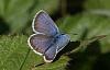 いくつかの蝶とMoは気候の変化に適応できない