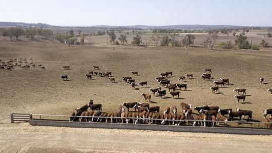 가뭄 증명 호주를 시도하는 이유는 바보의 심부름입니다