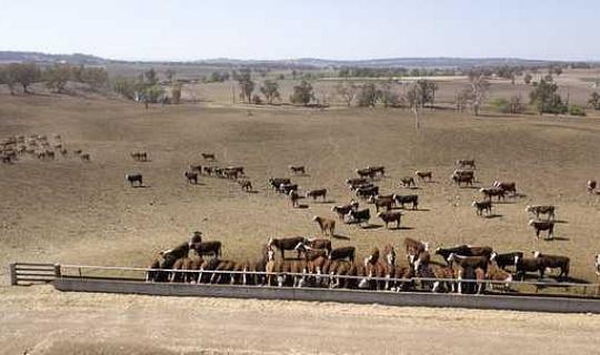 لماذا محاولات لإثبات الجفاف أستراليا هو خطأ أحمق