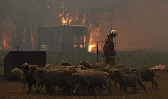 How Wildfire Smoke AfHow Wildfire Smoke Affects Pets And Other Animals