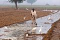 Luftförorening och bevattning Mask Extremes av Indiens 2019 Heatwave