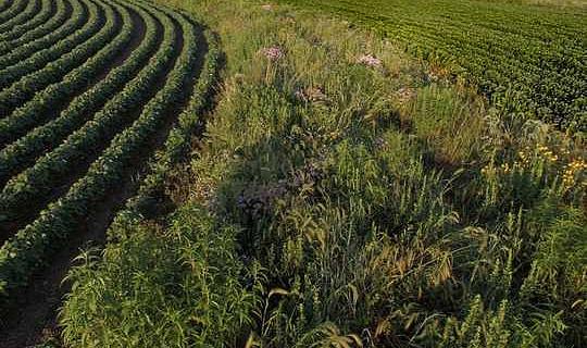 يحتاج مزارعو ولاية أيوا - والأكل الأمريكيون - إلى مناقشة وطنية حول تحويل الزراعة إلينا