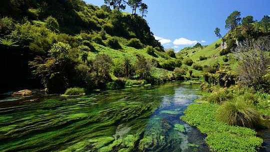 ニュージーランドが湖と川の健康を回復する計画を開始