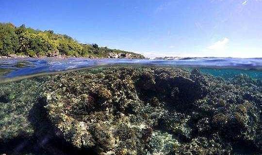 فتحنا جميع بياناتنا عن الشعاب المرجانية - المزيد من العلماء يجب أن يفعلوا الشيء نفسه