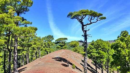 ما در حال پیگیری برای از دست دادن بسیاری از درختان جزیره