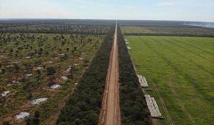 Другий за величиною ліс у Південній Америці також горить - і екологічно чисте вугілля підтримує його знищення