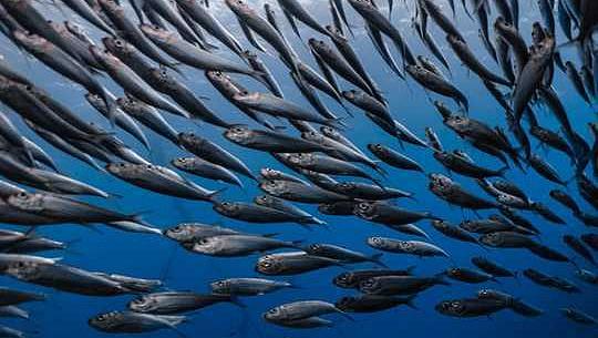 Az éghajlatváltozás és a túlhalászás növeli a halak mérgező higanyszintjét