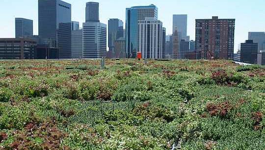 Groen dakke verbeter die stedelike omgewing - so hoekom het nie al die geboue dit nie?