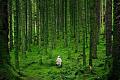 كيفية تصميم غابة صالح للشفاء الكوكب