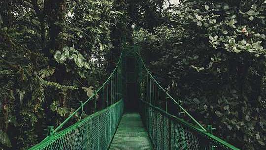 جنگلات ہیں موسمیاتی تبدیلی کے خلاف ہمارے بہترین ہتھیار؟