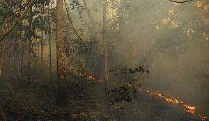 Amazon Firesの説明:それらは何なのか、なぜ彼らはそんなに傷ついているのか、どうすればそれらを止めることができるのか?