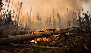 Kuinka alkuperäiskansojen johtajuus suojelee yhteisöjä ilmasto-onnettomuuksista