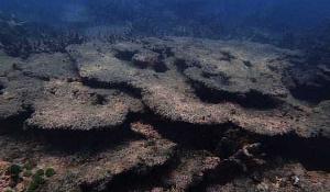 Ontmoet die Super Corals wat suur, hitte en versmoring kan hanteer