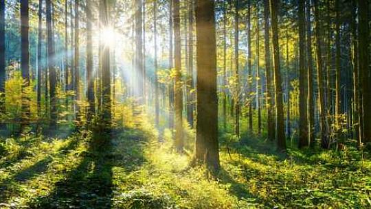 موسمیاتی ایمرجنسی کے لئے سب سے زیادہ مؤثر اور سب سے سستا حل کے درمیان ایک ٹریلین درختوں کو زبردست 'پلانٹ کرنے کے لئے عالمی کوشش