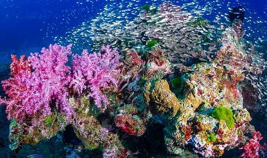 Kan 'n onderklankbaan regtig koraalriwwe lewendig maak?