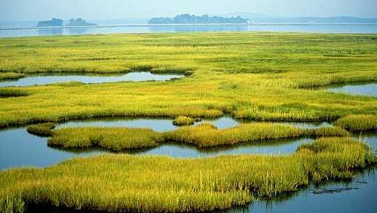 Оскільки громади відбудовуються після ураганів, водно-болотні угіддя можуть значно зменшити збиток від власності