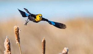 Le climat plus chaud et plus humide profite à certains oiseaux alors que les zones humides sont visibles