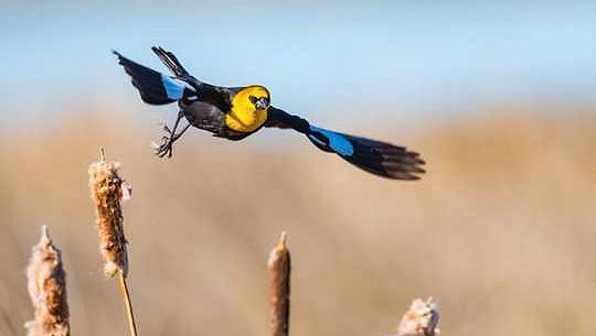 A melegebb, nedvesebb éghajlat előnyeit nyújt néhány madár, mivel a vizes élőhelyek eltűnnek