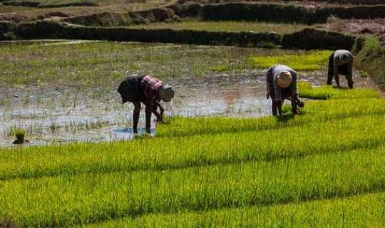 Den privata sektorn, jordbruk och klimatförändringar. Ansluta prickarna