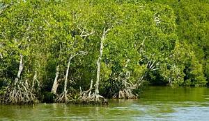 La montée des mers permet aux zones humides côtières de stocker plus de carbone