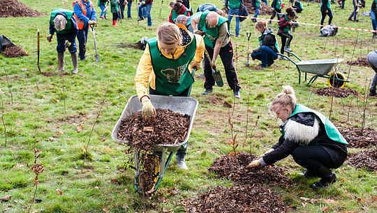 気候変動と戦うために木を植える現在の提案がひどく見当違いである理由