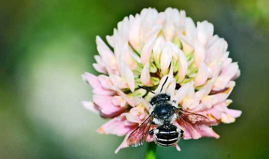 5-sätt En lat gräsmatta gör pollare lyckliga