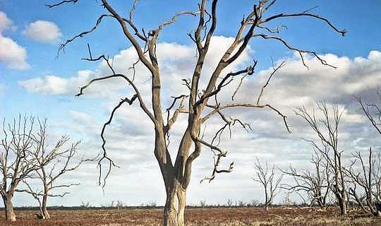 最近的澳大利亞乾旱可能是800年來最糟糕的