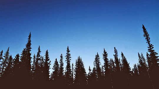 درختان CO2 چقدر طولانی تر خواهند شد؟