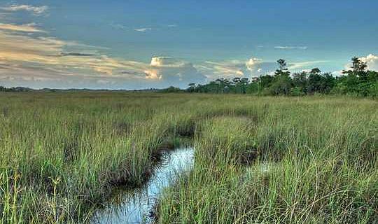 موسمیاتی تبدیلی کی بجائے فلوریڈا کے ایگلگلڈ بحال کرنے میں کیا ممکن ہے