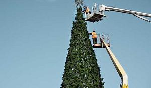 Is het beter om een echte kerstboom of een nep te kopen?