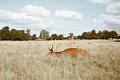 Beloon 25% van die Verenigde Koninkryk vir minder klimaatsverandering, meer wilde diere en 'n lewe wat nader aan die natuur leef