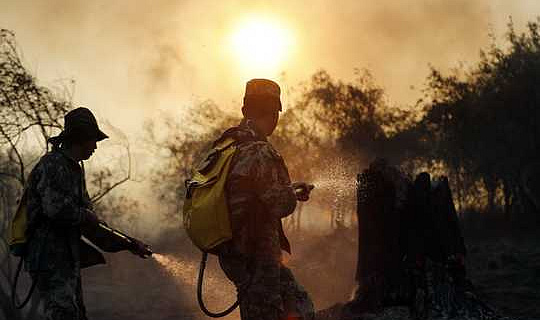 يربا ماتي يجلب الطاقة والأرباح في المجتمعات الريفية في باراجواي التي تواجه إزالة الغابات