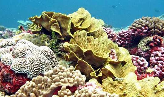 Refugee Corals Move To Escape Warming Seas
