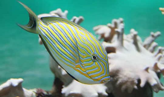 Hvordan klimaændringer og pesticider kan sammensætte for at nedbringe fiskpopulationer