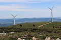 炭素に富む泥炭湿地で構築された風力発電所は、気候変動と戦う能力を失っています