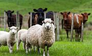 ¿Qué pasa si sacamos a todos los animales de granja de la tierra y plantamos cultivos y árboles?