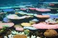 Korallrev som lyser ljust neon under blekning erbjuder hopp om återhämtning
