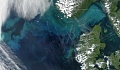 टिनी प्लैंकटन ड्राइव महासागर में प्रक्रिया करता है जो वैज्ञानिकों के रूप में बहुत कार्बन पर कब्जा करता है