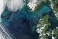과학자들이 생각한 것처럼 많은 양의 탄소를 두 번 포착하는 바다에서 작은 플랑크톤 드라이브 프로세스