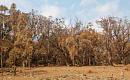나무의 언덕 전체가 이번 여름에 갈색으로 변했습니다. 생태계 붕괴의 시작인가?