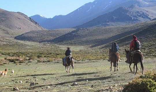 İklim Krizi Şili Hayvancılık Çiftçilerini Yabani Otçullara Karşı Döndürüyor
