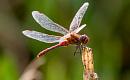 生物多様性の突進を阻んでいる昆虫に会おう