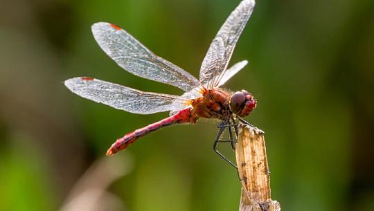 Möt de insekter som försvarar djupet i biologisk mångfald