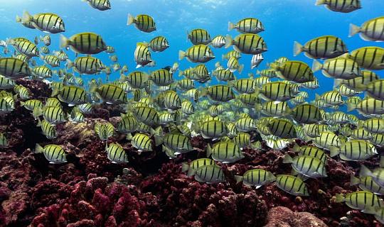 Marine Hitzewellen Zauberprobleme für tropische Rifffische - noch bevor Korallen sterben